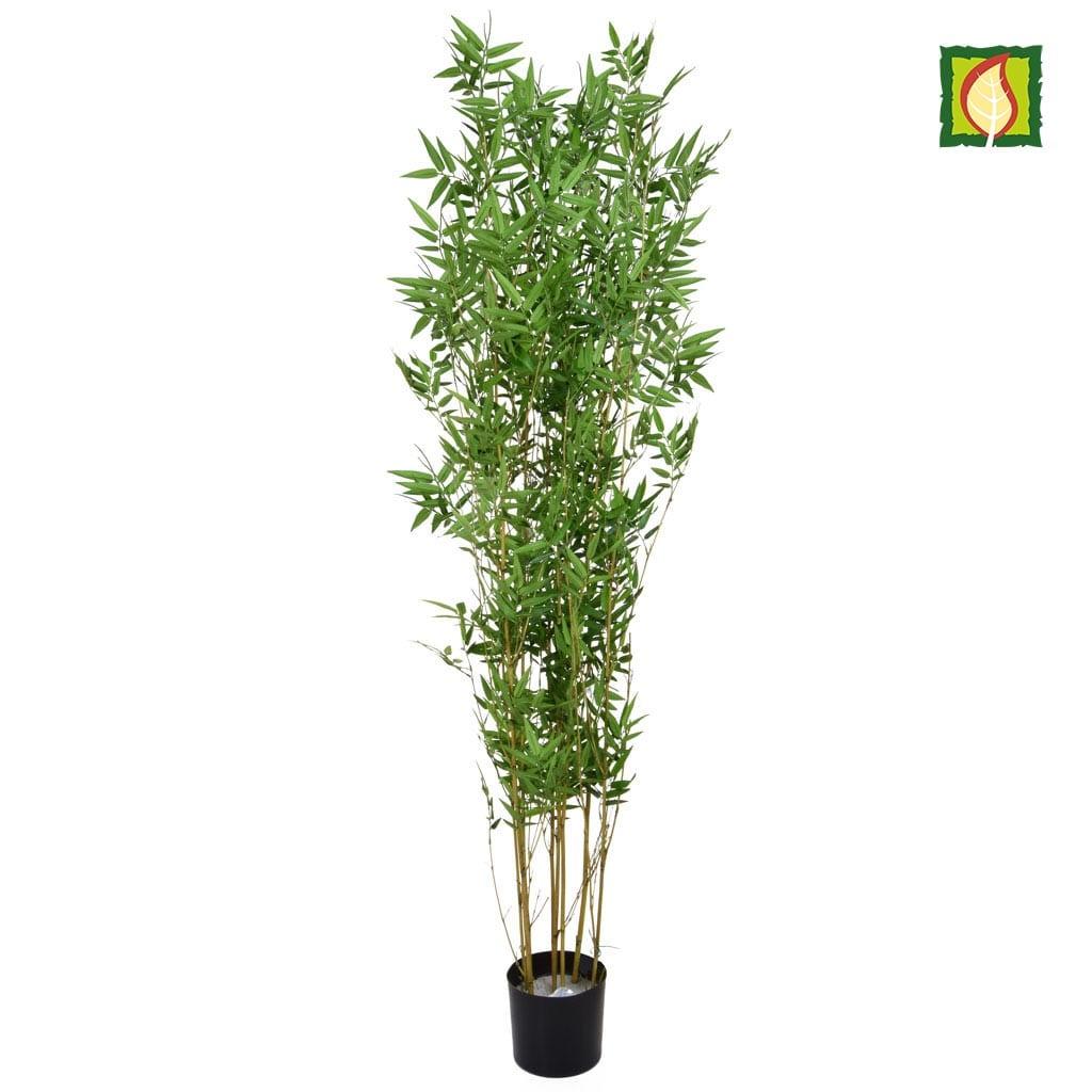 NTT Bamboo Oriental 180cm 2775lvs FR