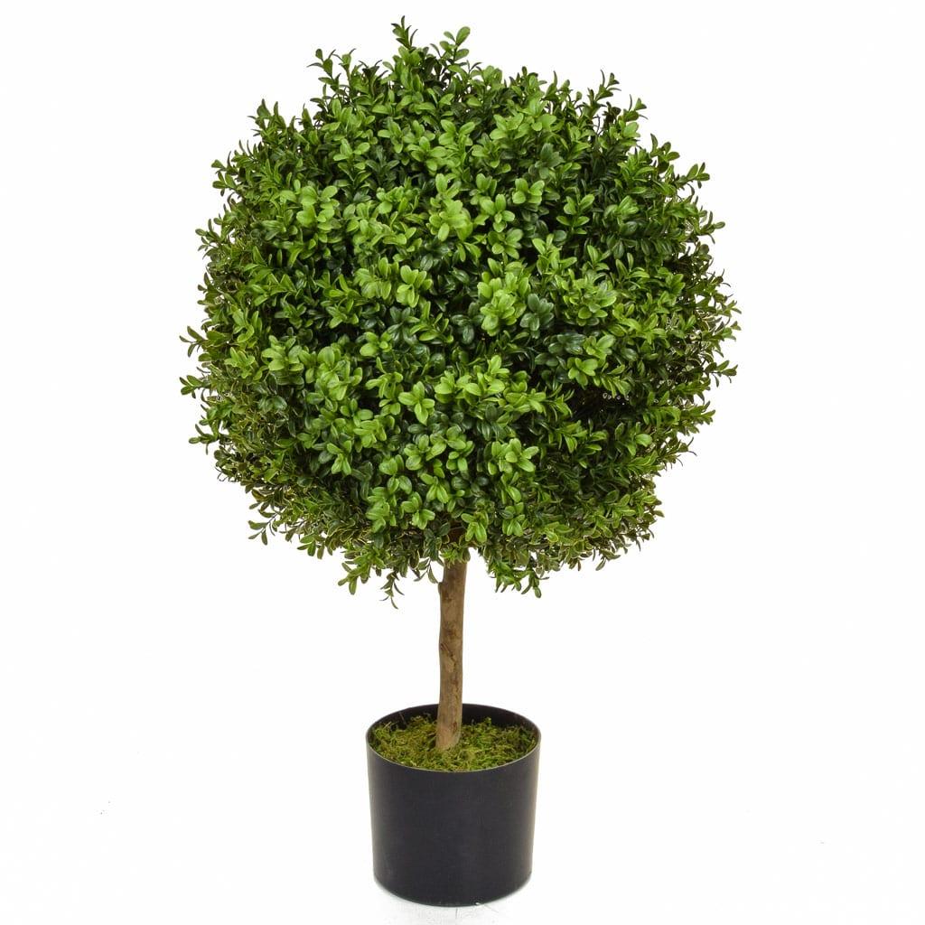 Topiary Buxus 50 Ball 70cm BA