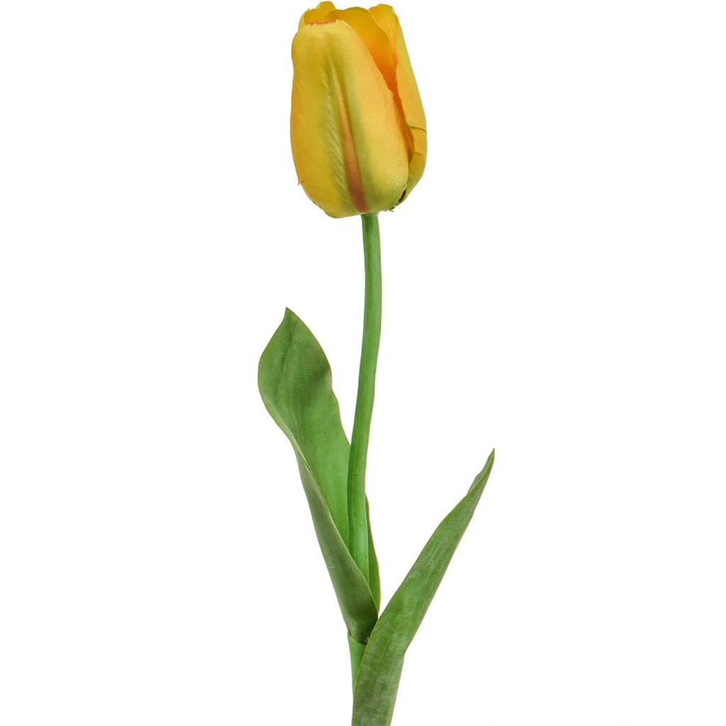 SF Tulip Elisa Yellow S 68cm