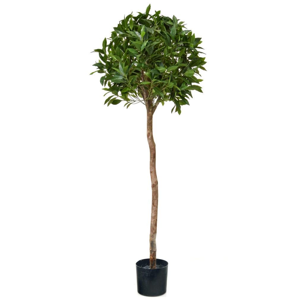 NTT Bay Laurel Ball Tree D 135cm