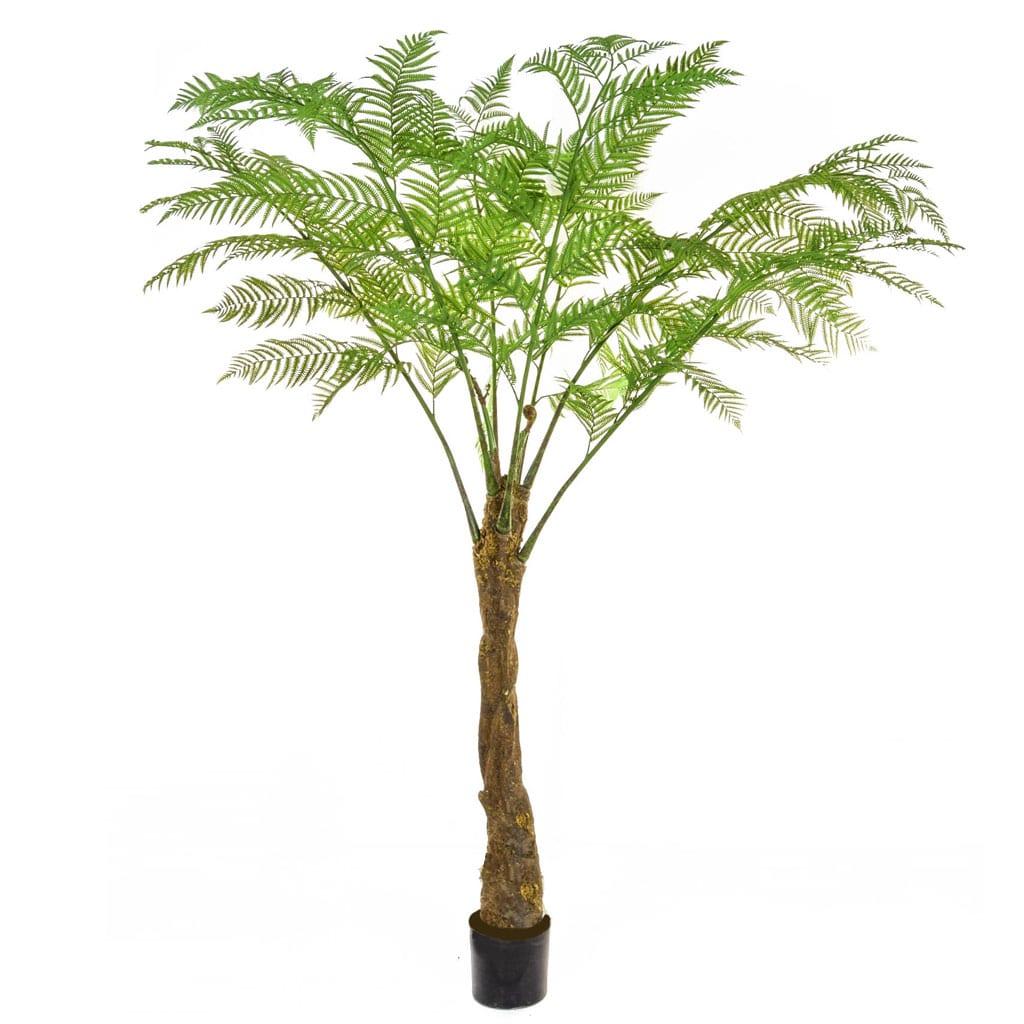 Palm Alsophila 210cm