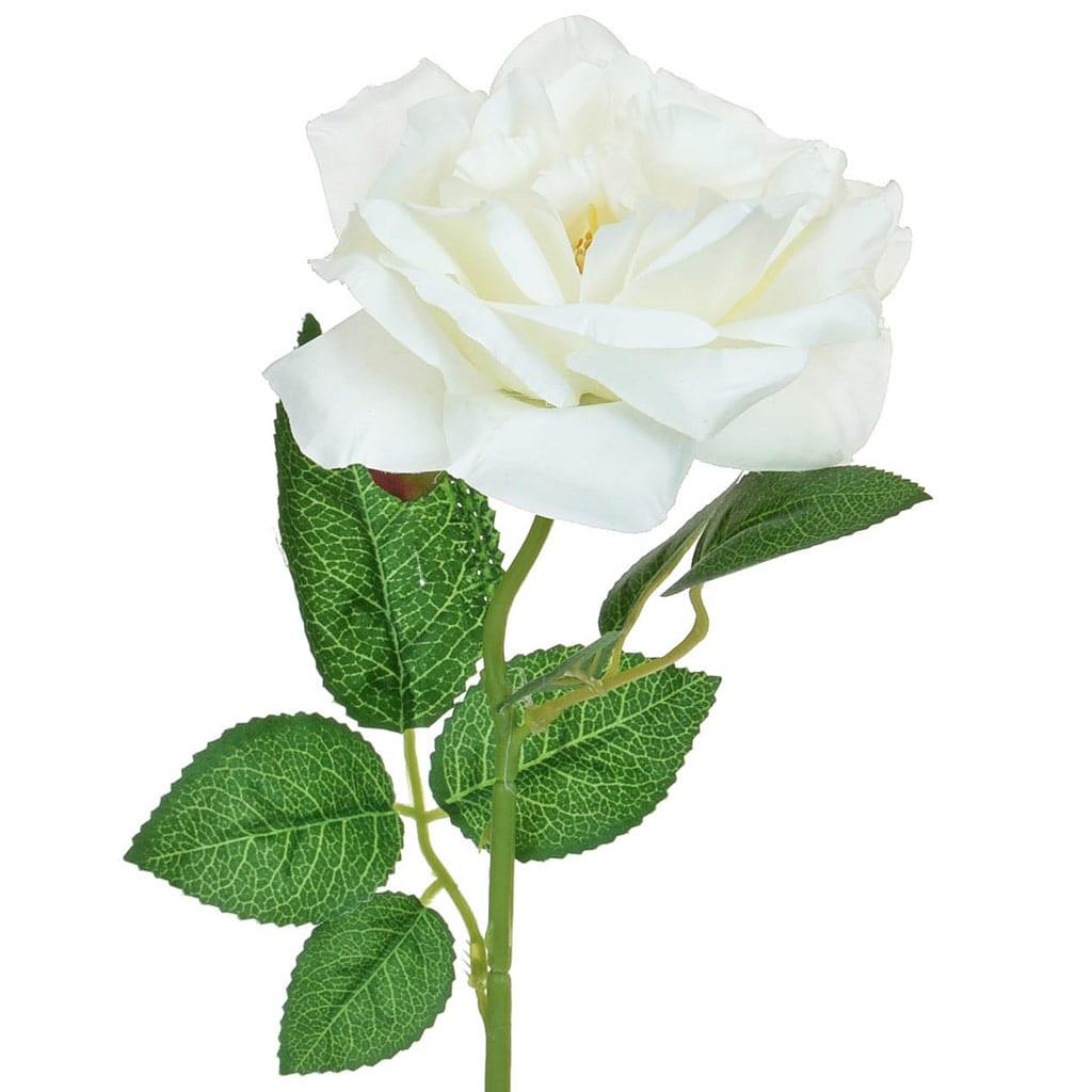 SF Rose white single W 50cm
