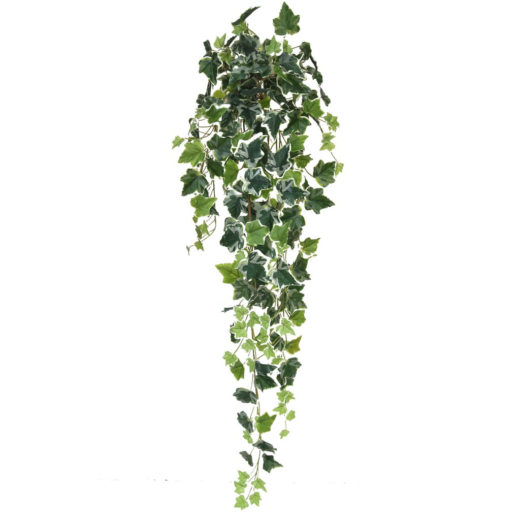 I & T English Ivy Bush Vari 100cm