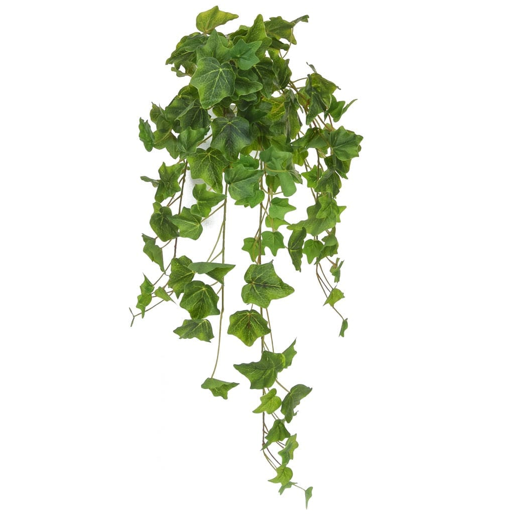 I & T English Ivy Bush Green 70cm