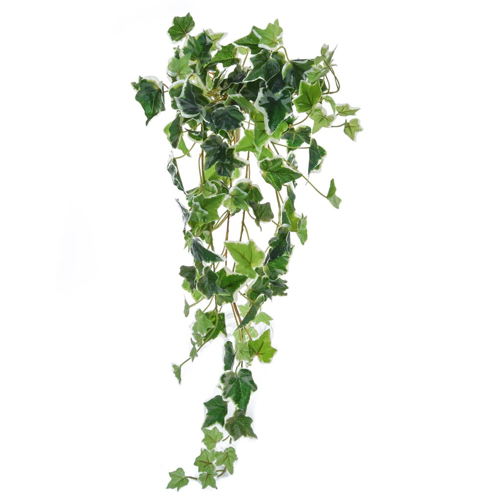 I & T English Ivy Bush Vari 70cm