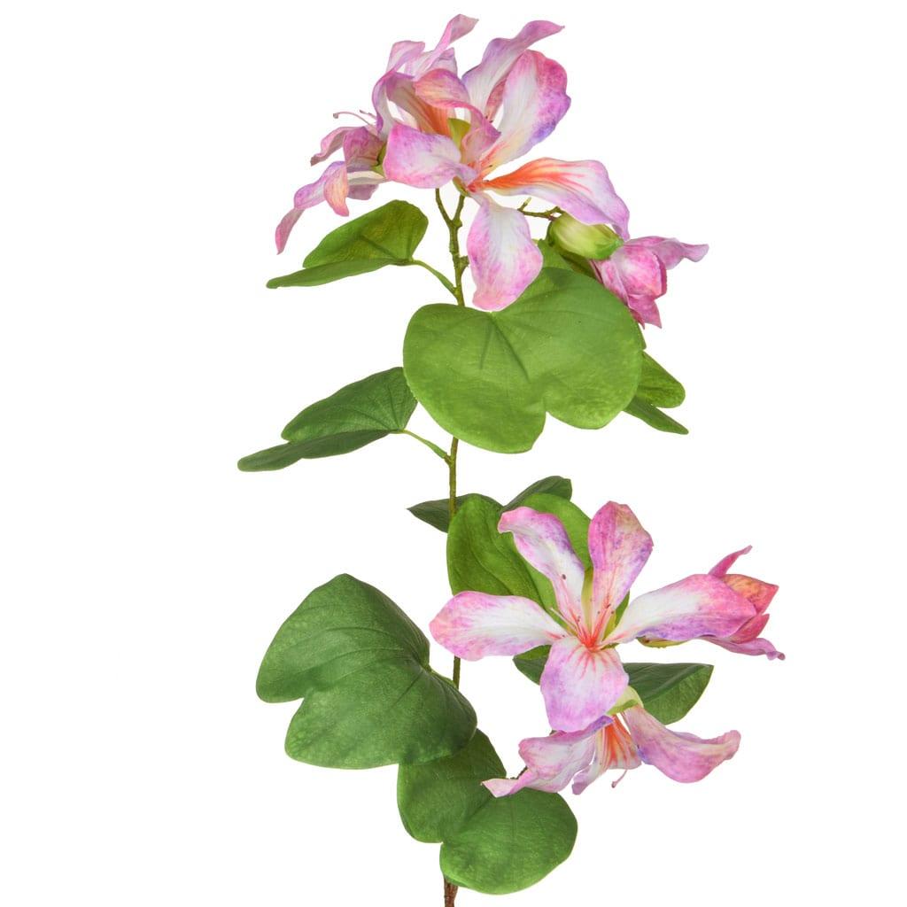 Plants Bauhinia Purple/Cream 85cm