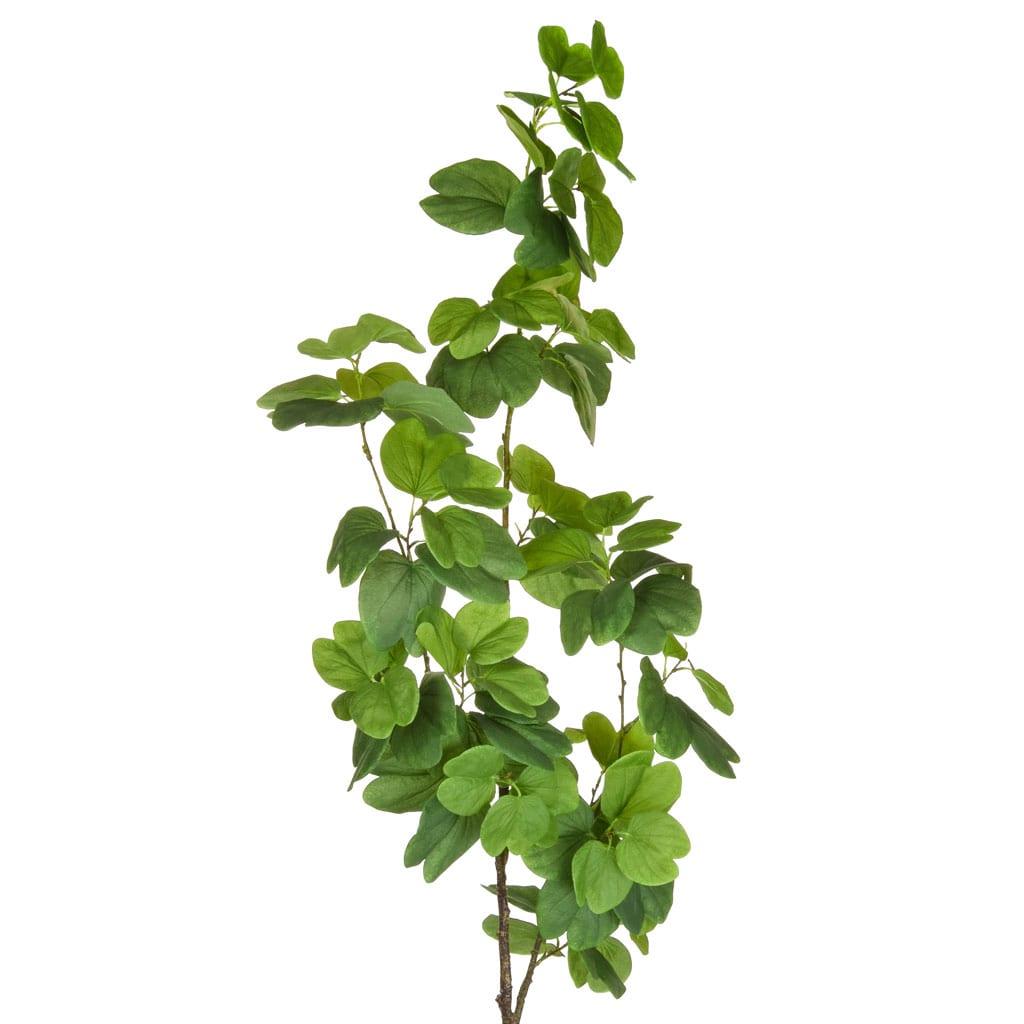 Plants Bauhinia Tree Green 200cm