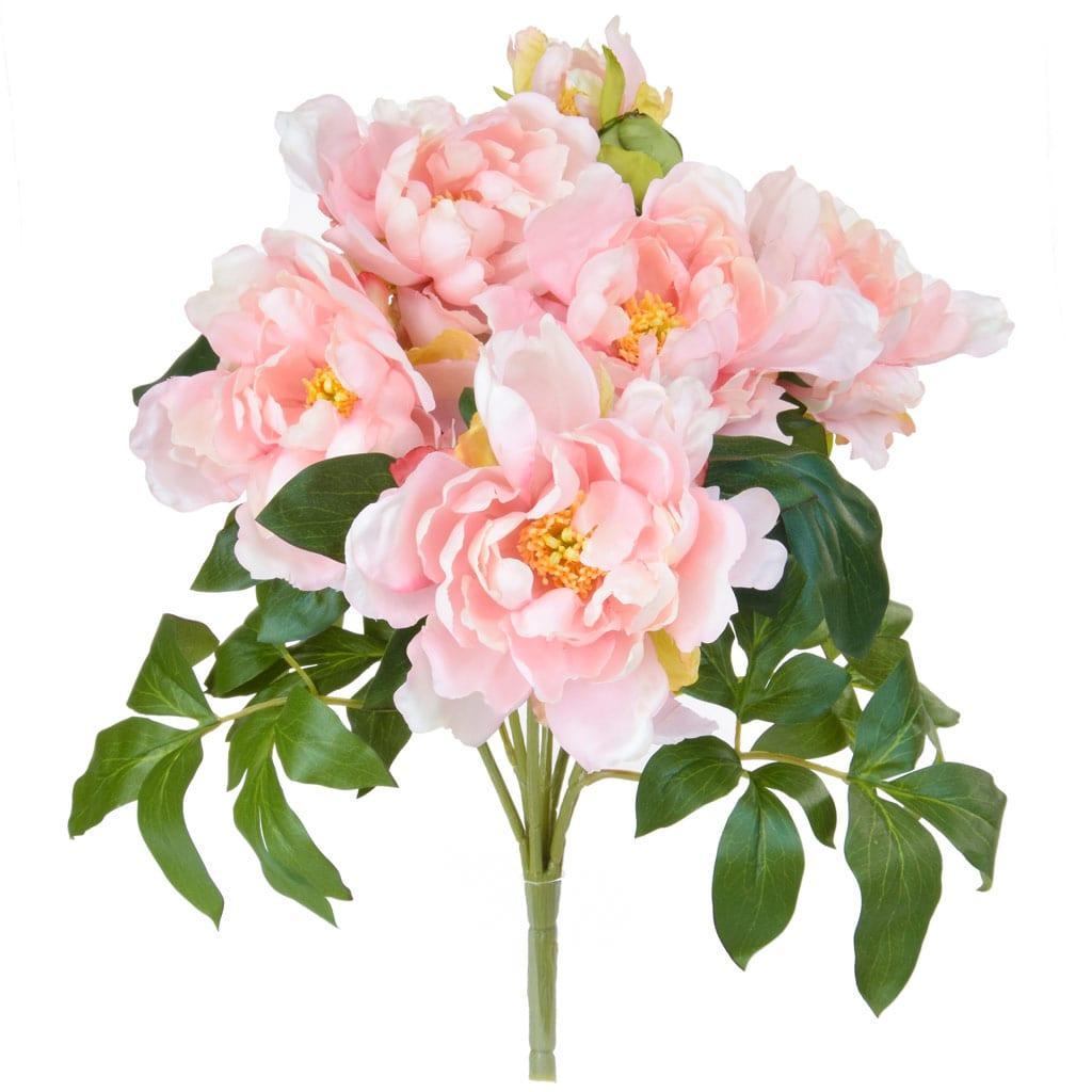 Plants Bush Peony Pink GB 49.5cm