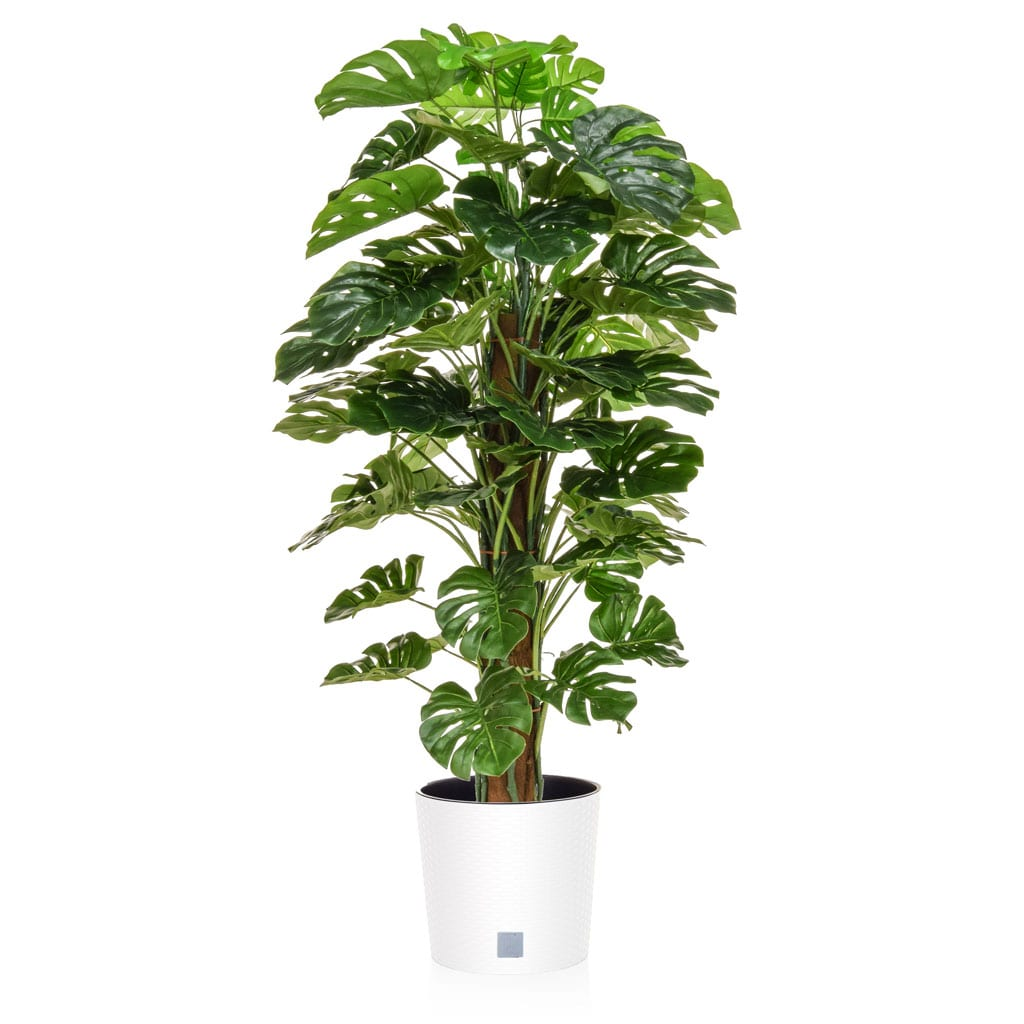 AN-Monstera in Rato Round White 150cm