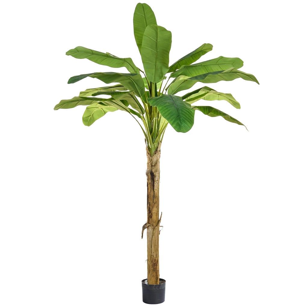 NTT Banana Tree PI 180cm