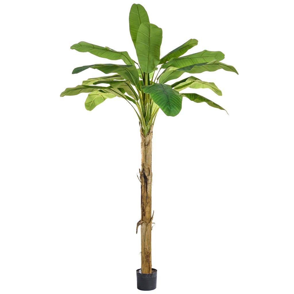 NTT Banana Tree PI 240cm