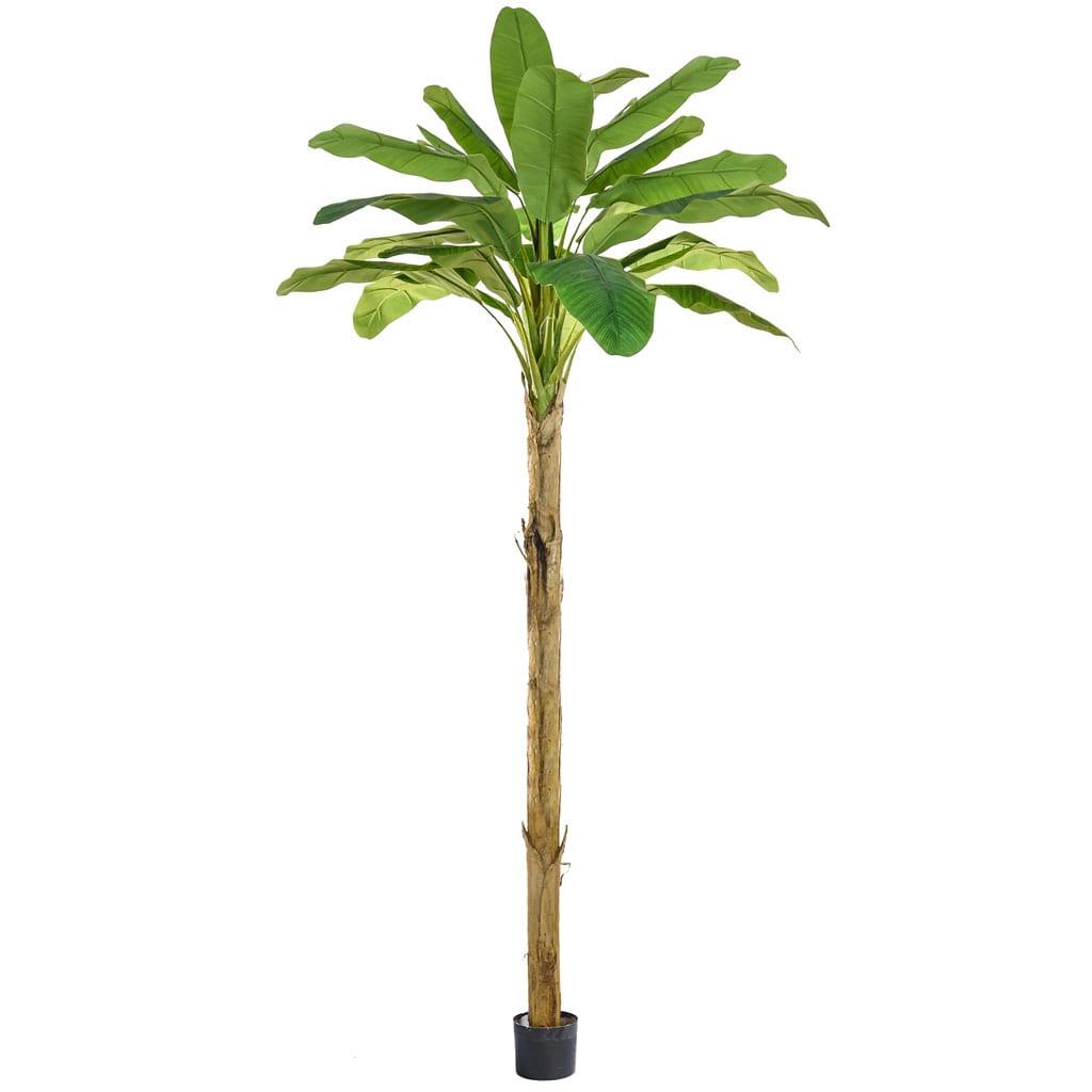 NTT Banana Tree PI 350cm