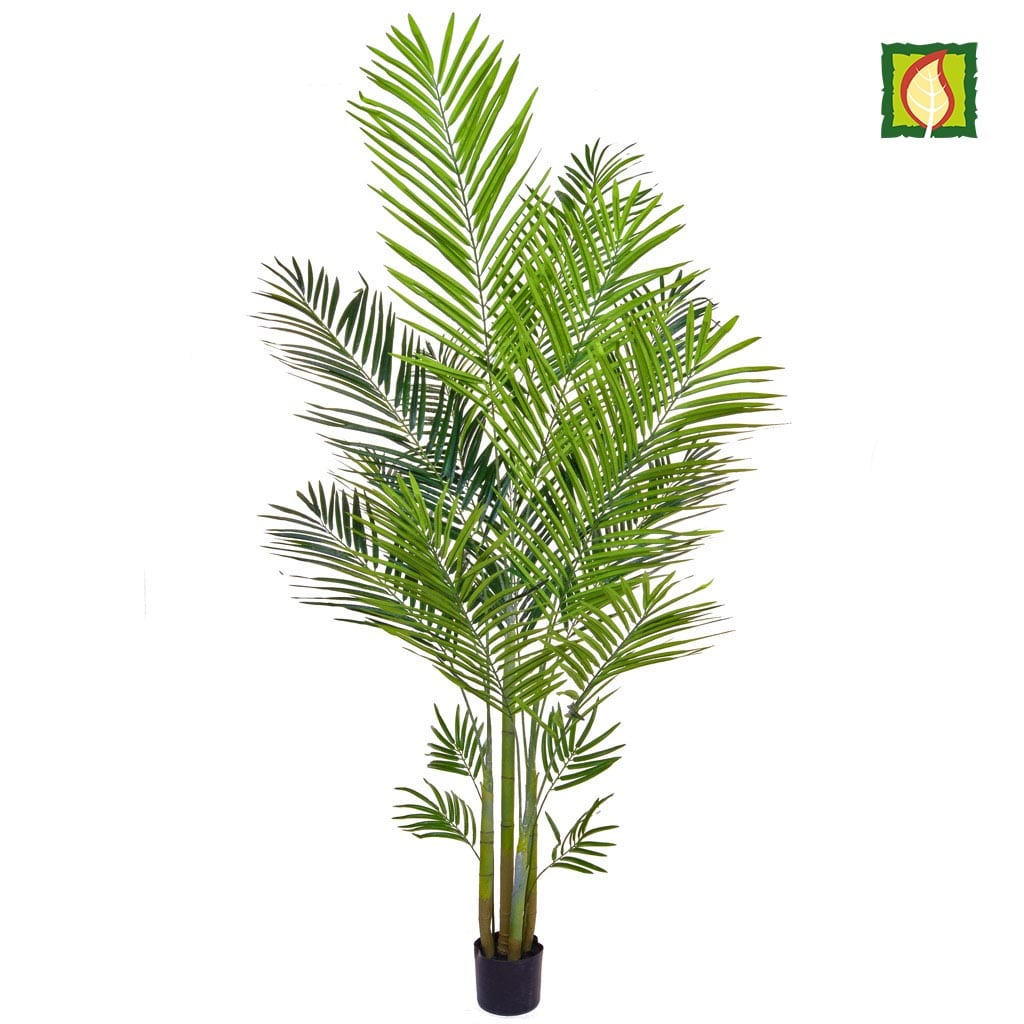 Palm Areca YF 180cm FR