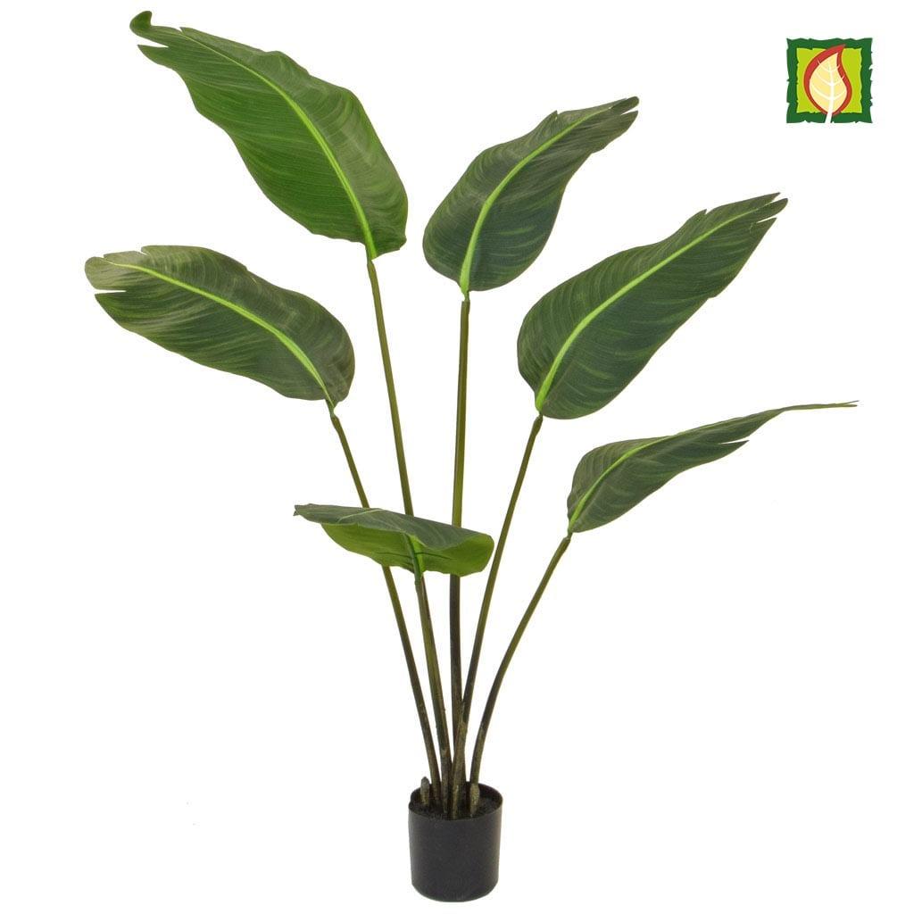 Plants Bird of Paradise YF 120cm FR