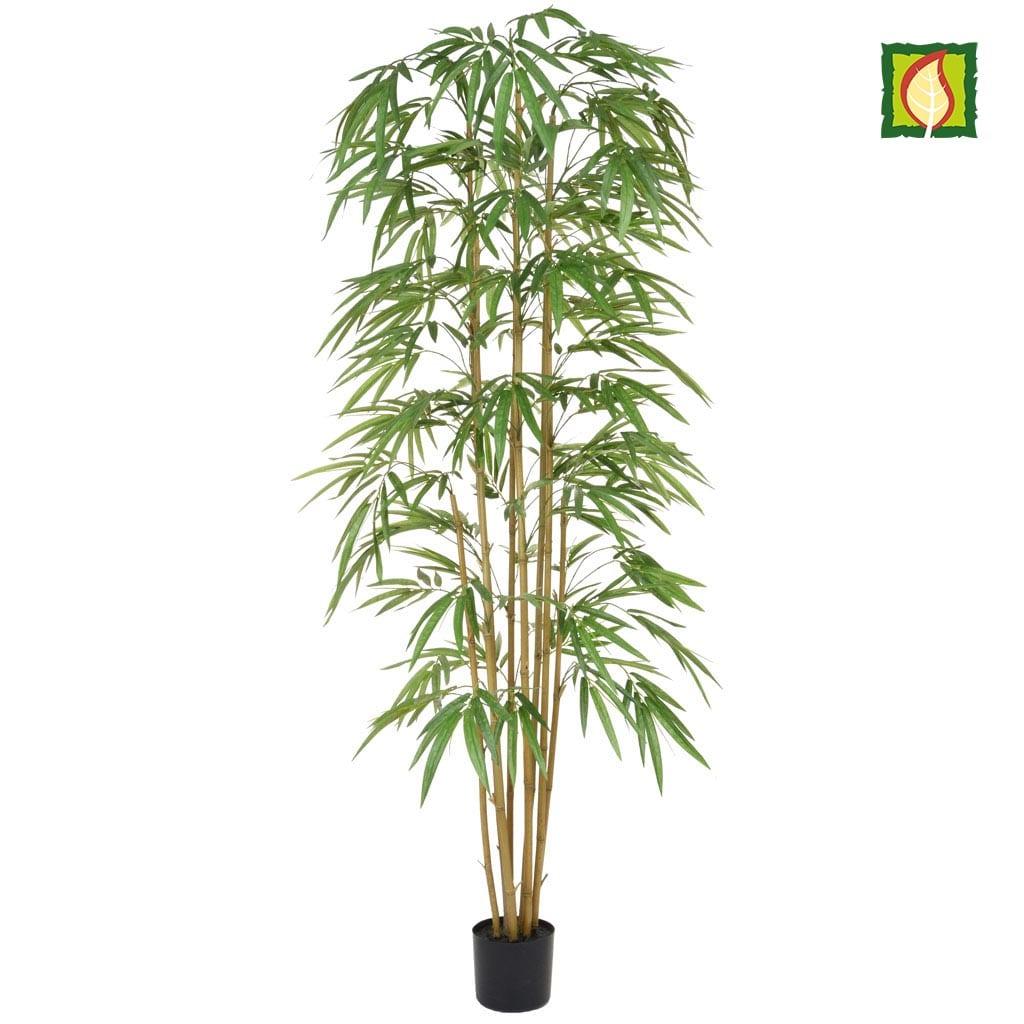 NTT Bamboo YF 210cm FR