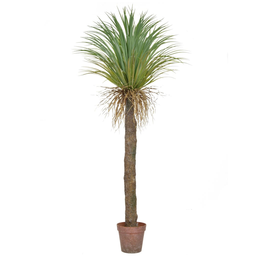 Palm Cycas in Brown Pot YF 180cm