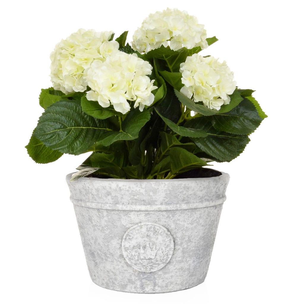 AN-White Hydrangea in Zinc Pot