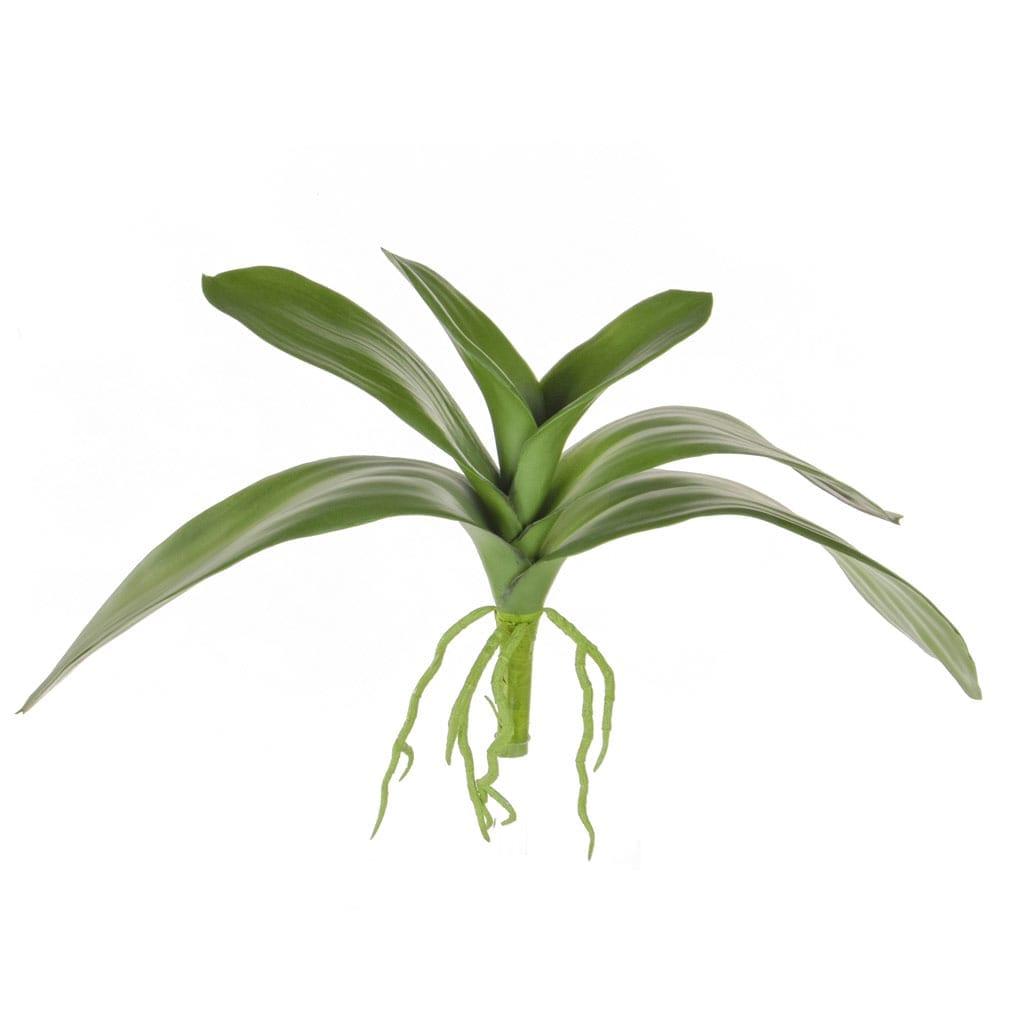SF Leaf Orchid JA 28cm