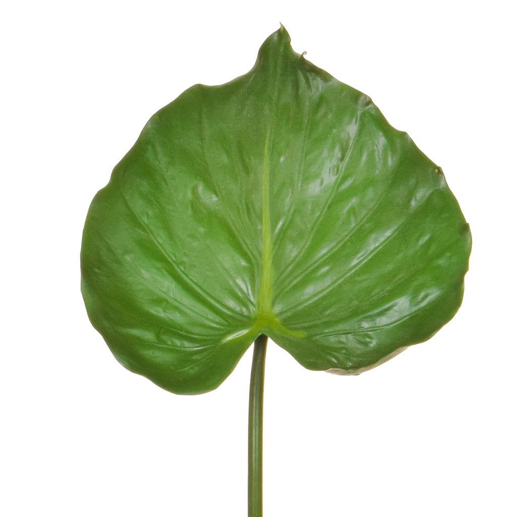 SF Leaf Alocasia JA 82cm