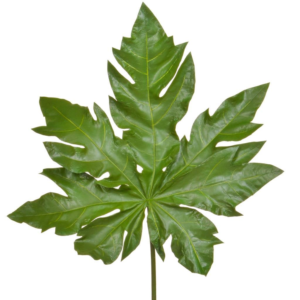 SF Leaf Papaya JA 105cm