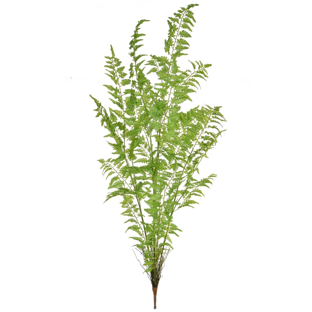 Plants Base Fern Bush XY 131cm