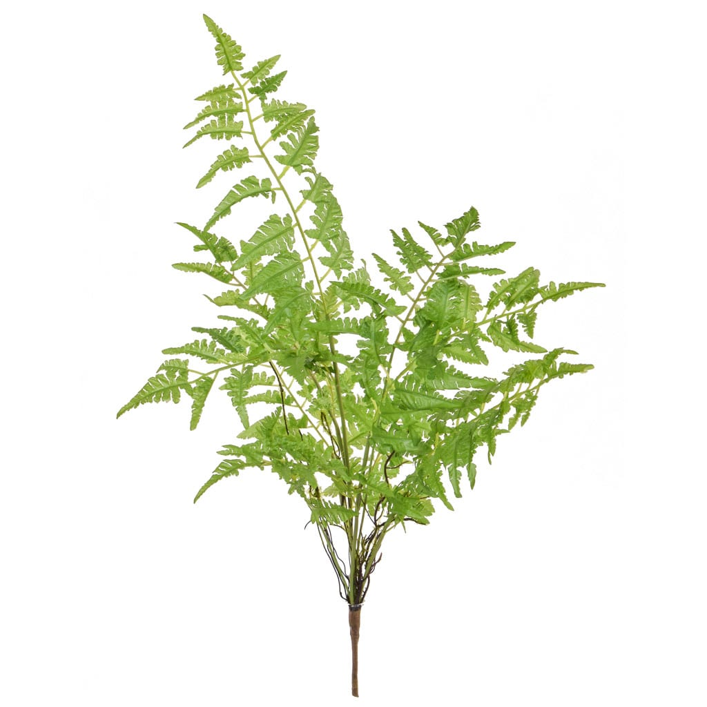 Plants Base Fern Bush  XY 67cm