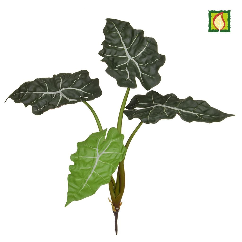 Plants Base Alocasia Bush DB 49cm FR
