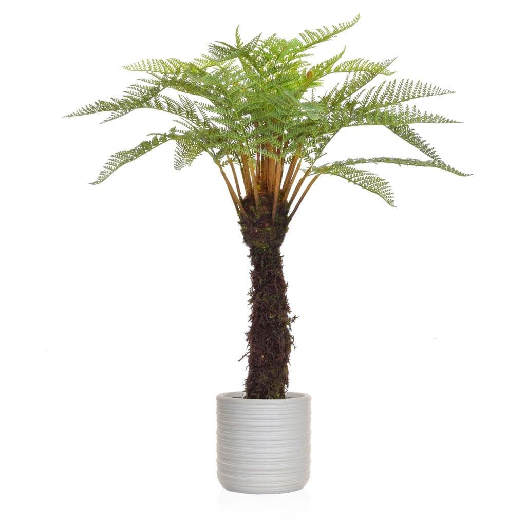 AN-Plants Tree Fern YF Athens Pot 122cm