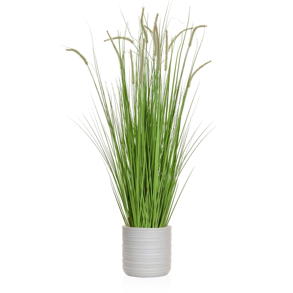 AN-Grass Dogtail Grass E Athens Pot 182cm