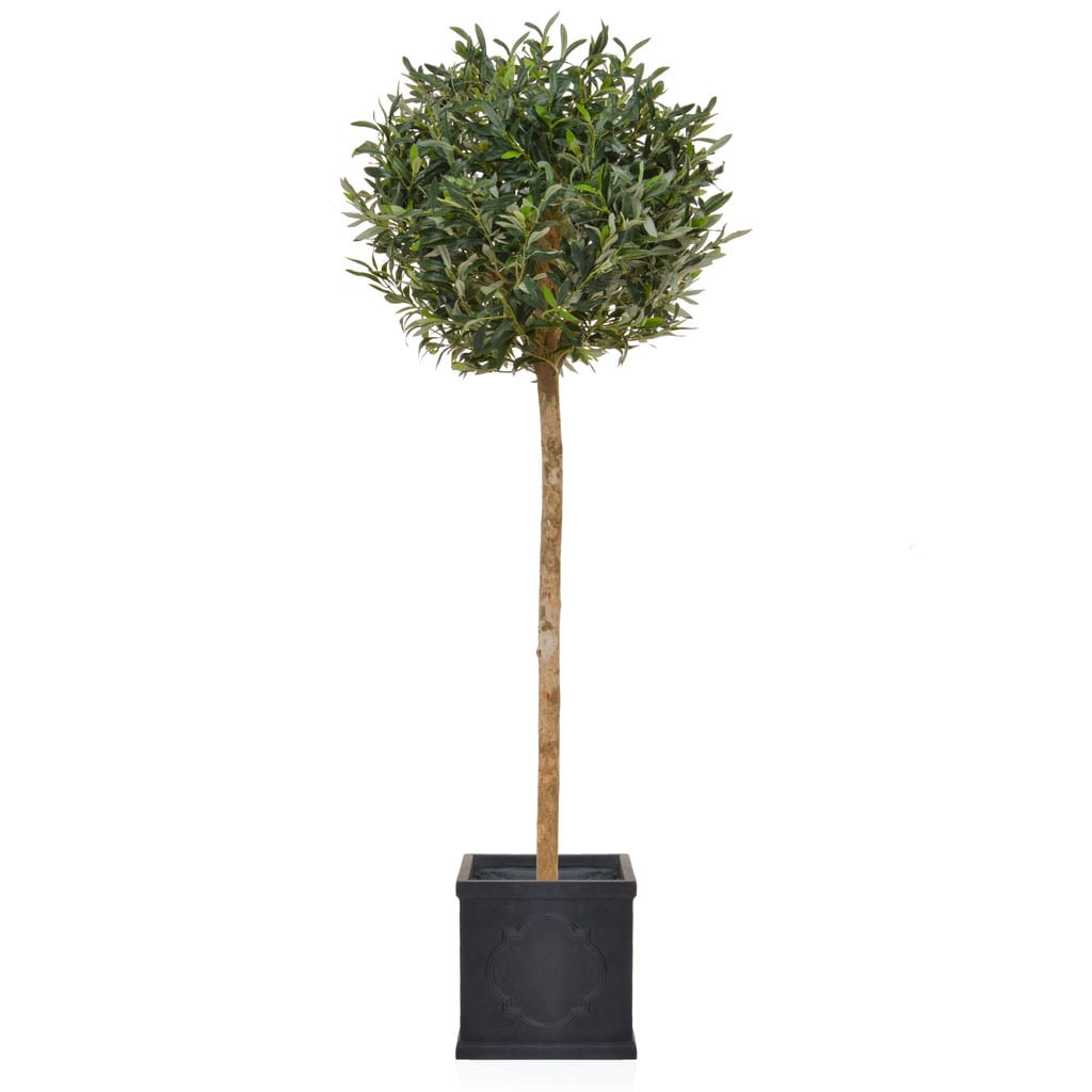 AN-Olive Ball Tree London Planter 155cm