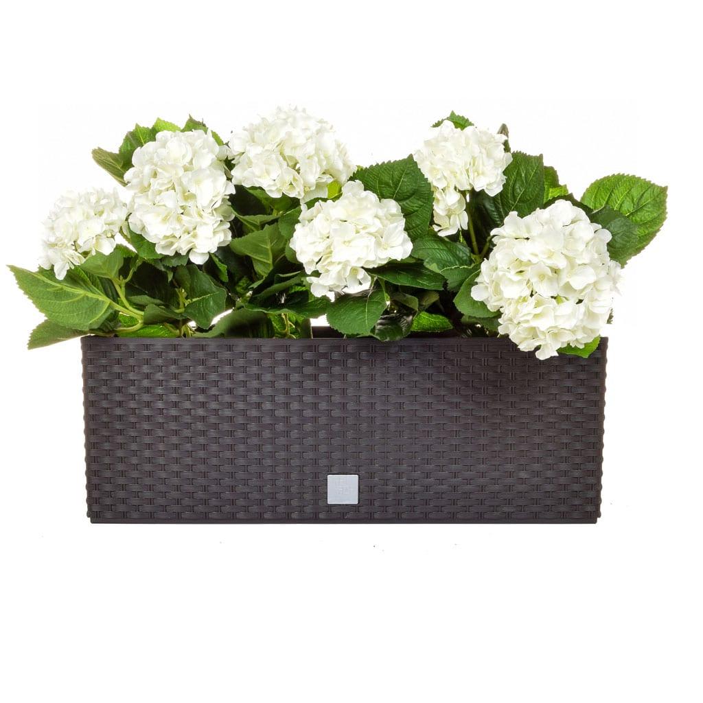 AN-Rato Black Trough White Hydrangea 50cm