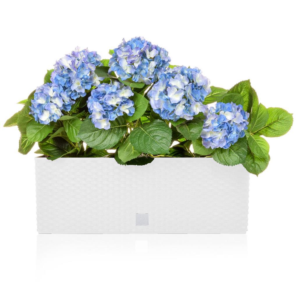 AN-Rato White Trough Blue Hydrangea 50cm