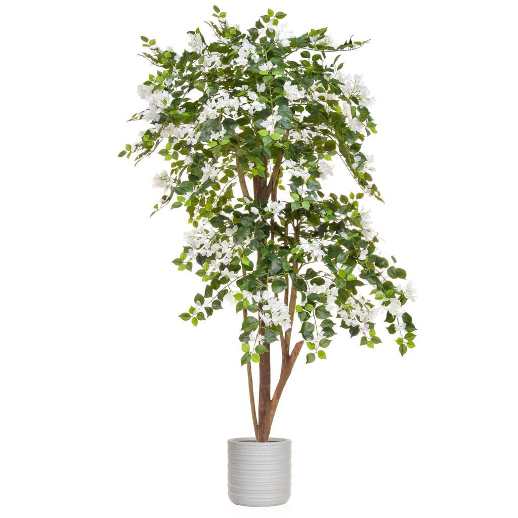 AN-White Boug Tree in Athens Pot 185cm