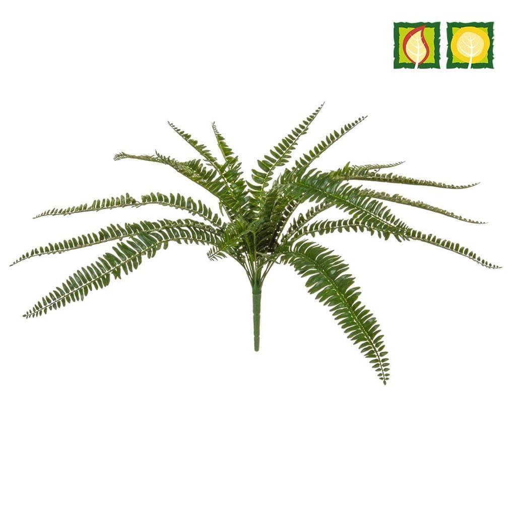Plants Boston Fern 55cm PI FR UV