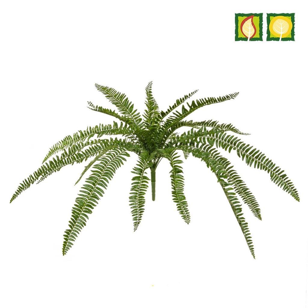 Plants Boston Fern 70cm PI FR UV