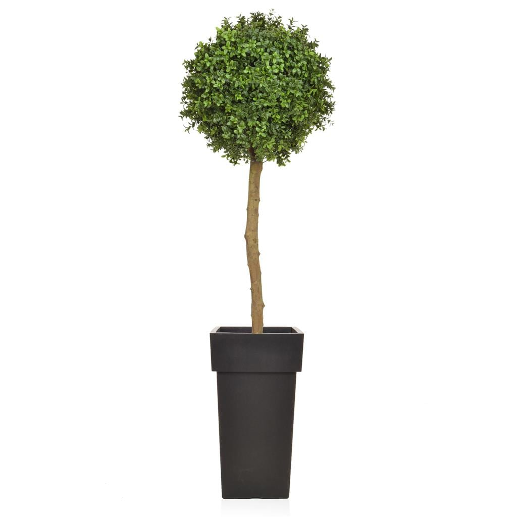 AN-Buxus Ball Tree PR in Lofly Pot 150cm