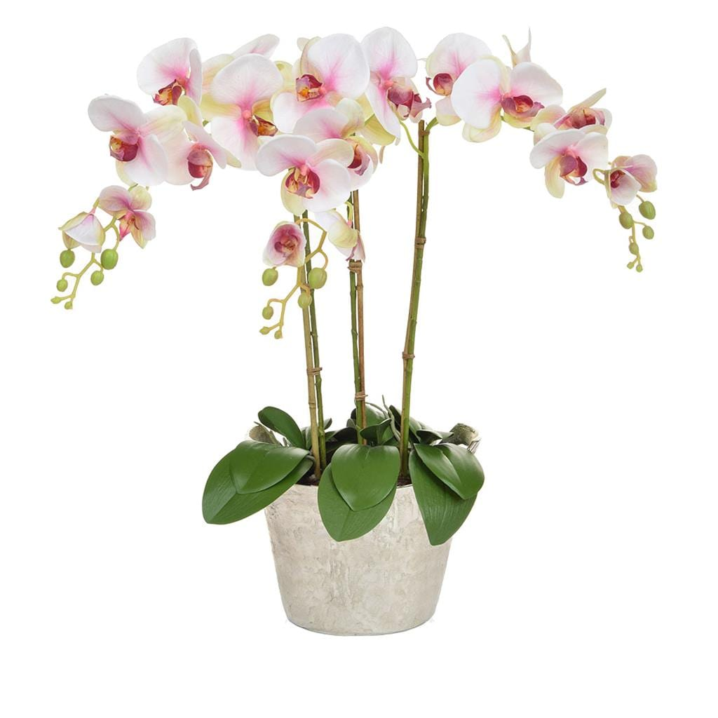 AN-Beauty Orchids XJ in Slv Ice Bucket 80cm