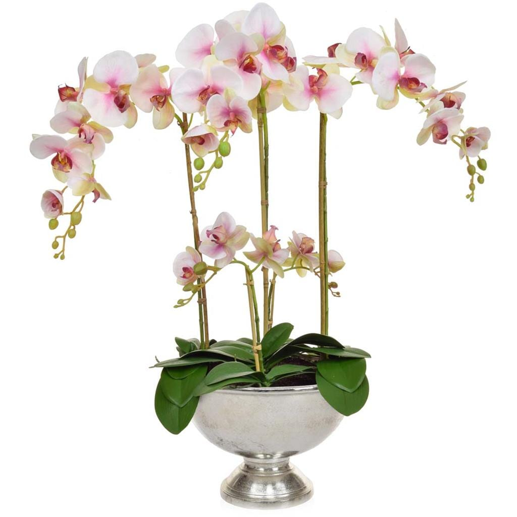 AN-Beauty Orchids XJ in Silver Bowl 75cm