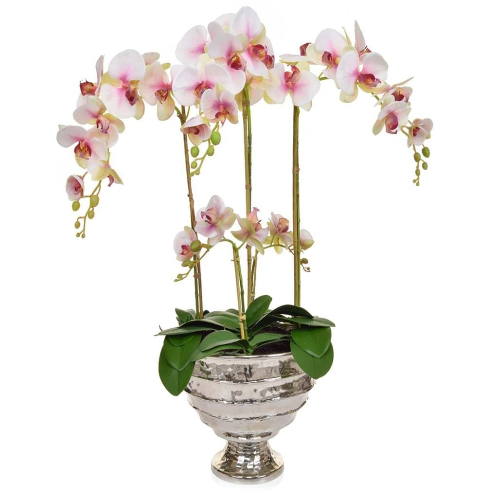 AN-Beauty Orchids XJ in Bamburgh Vase 90cm