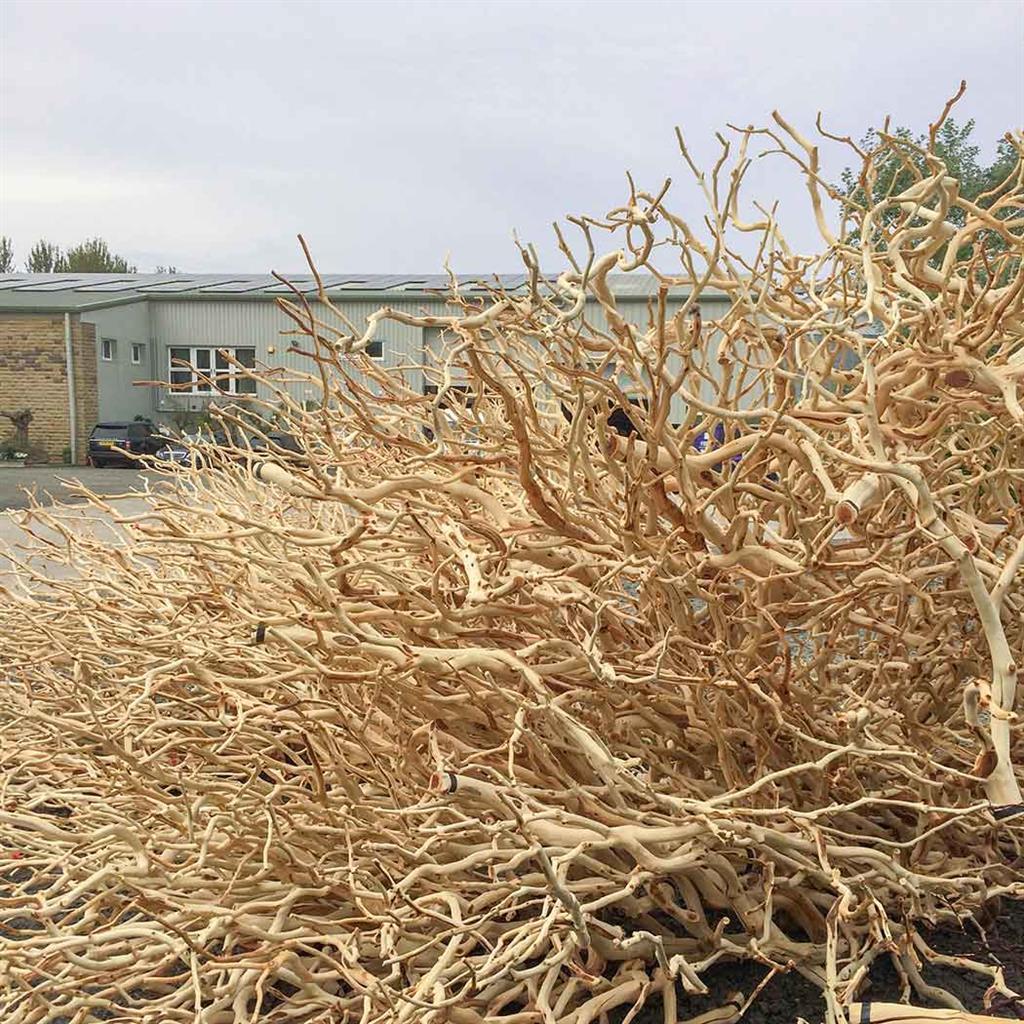 W-Manzanita Sand Blasted B 60cm