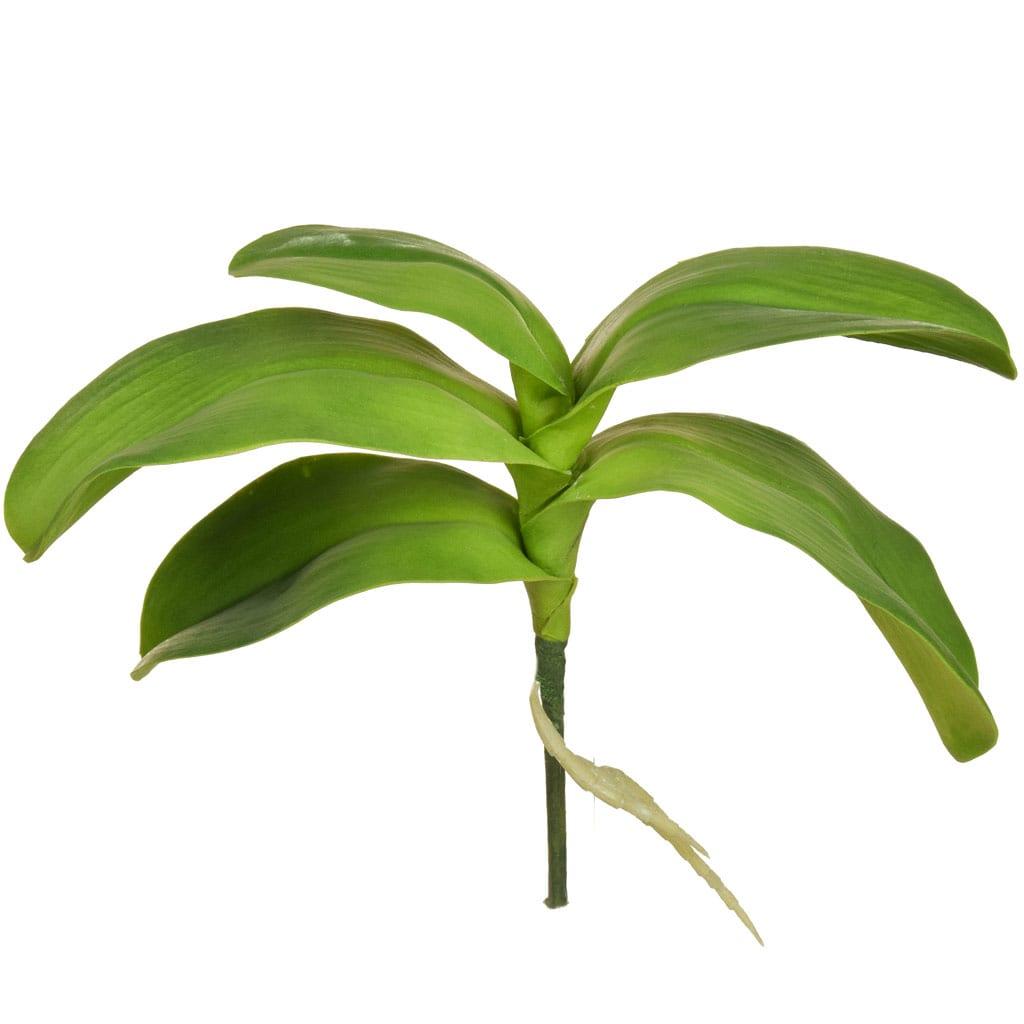 SF Leaf Orchid Phalaenopsis KL 5lvs 29cm