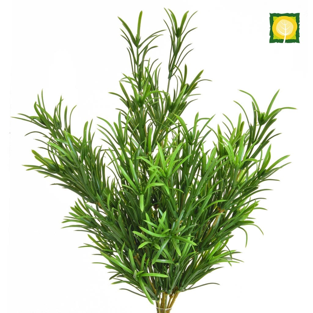 Plants Base Podocarpus Bush 46cm UVSILX