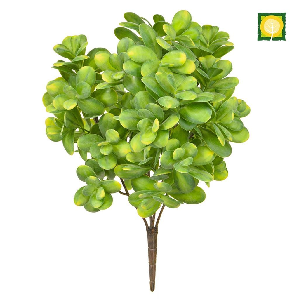 Plants Base Boxwood Grn/Yell 40cm UVSILX