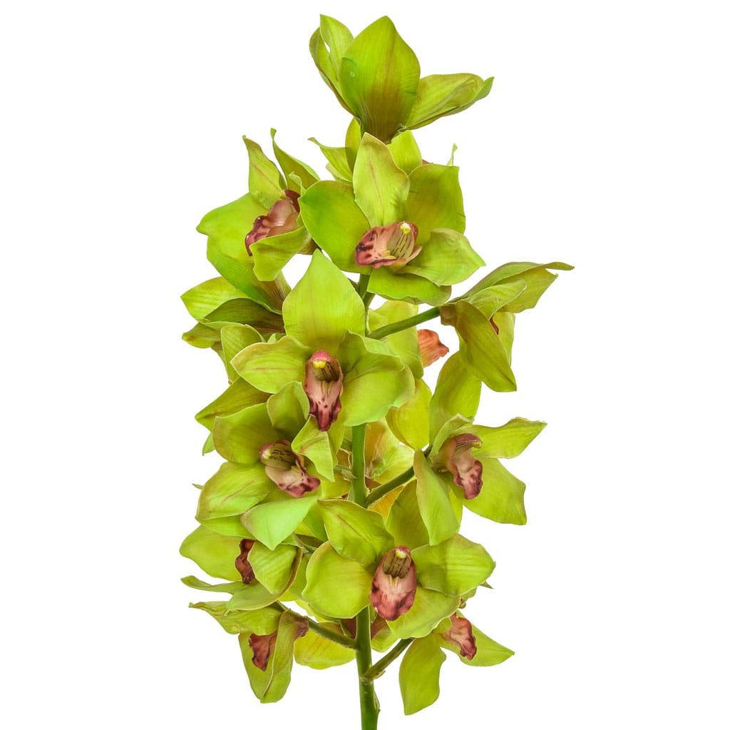 SF Orchid Cymbidium Large IA Green 102cm
