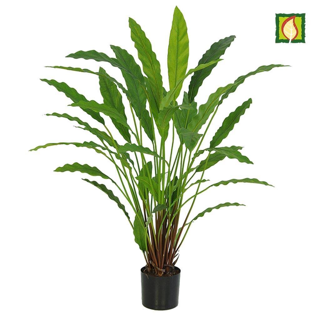 Plants Base Potted Calathea 40lvs 77cm FR