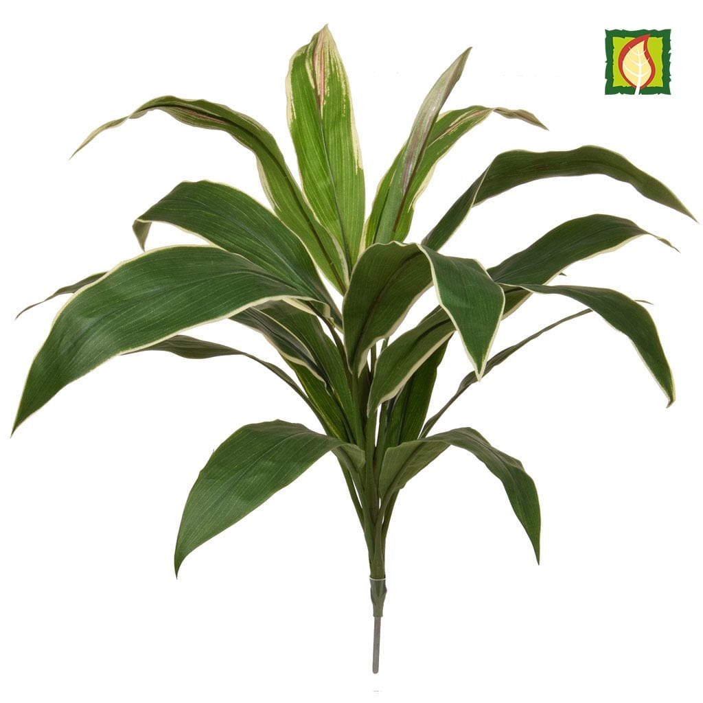 Plants Base Cordyline Grn/Yell 62cm FR