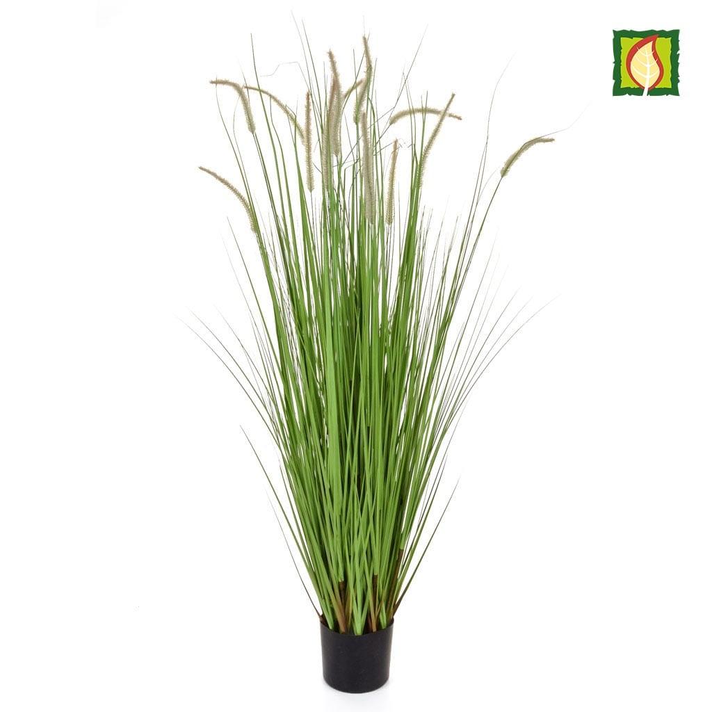 Grass Dogtail Grass E with pot 180cm FR