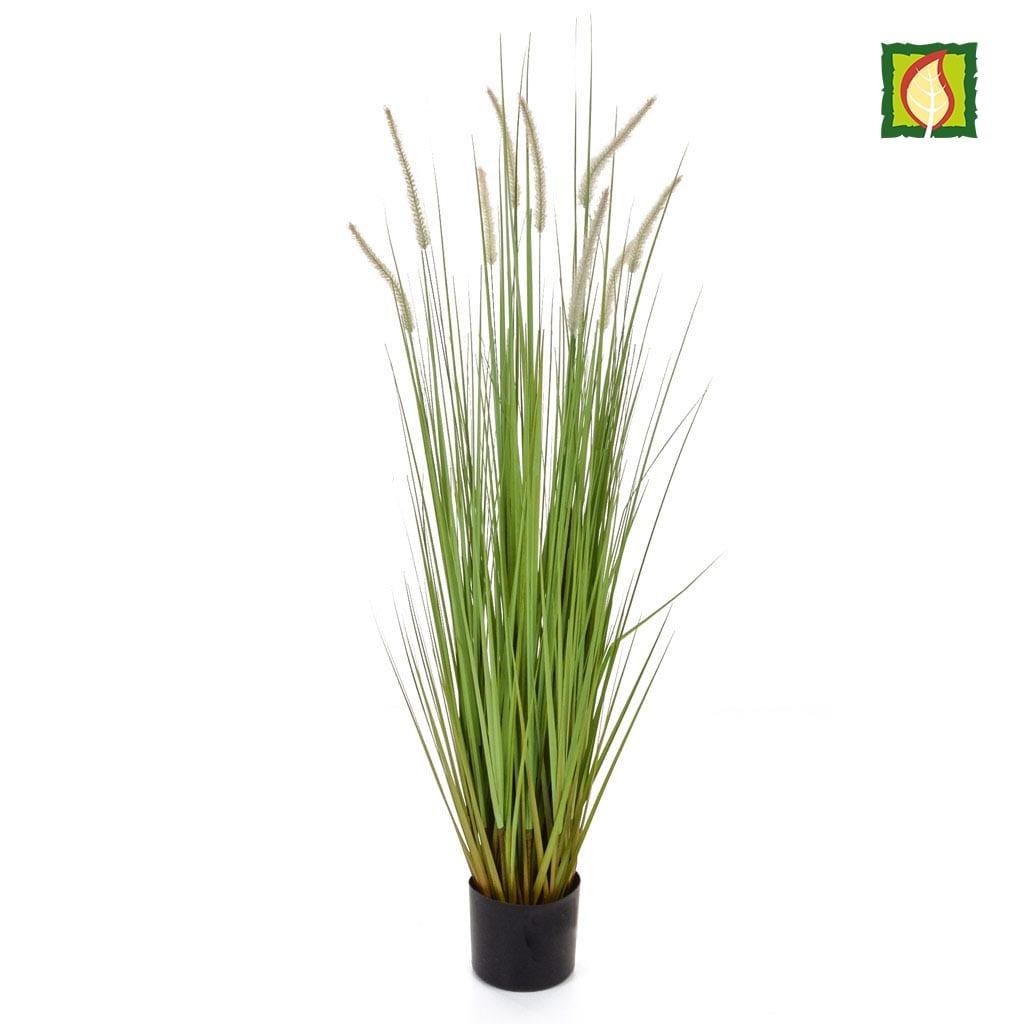 Grass Dogtail Grass C with pot 120cm FR