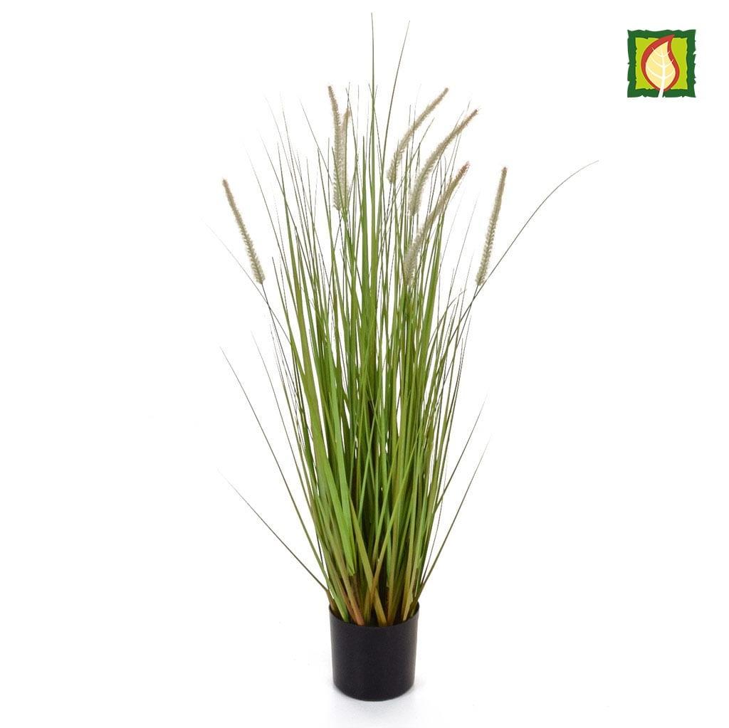 Grass Dogtail Grass B with pot 90cm FR