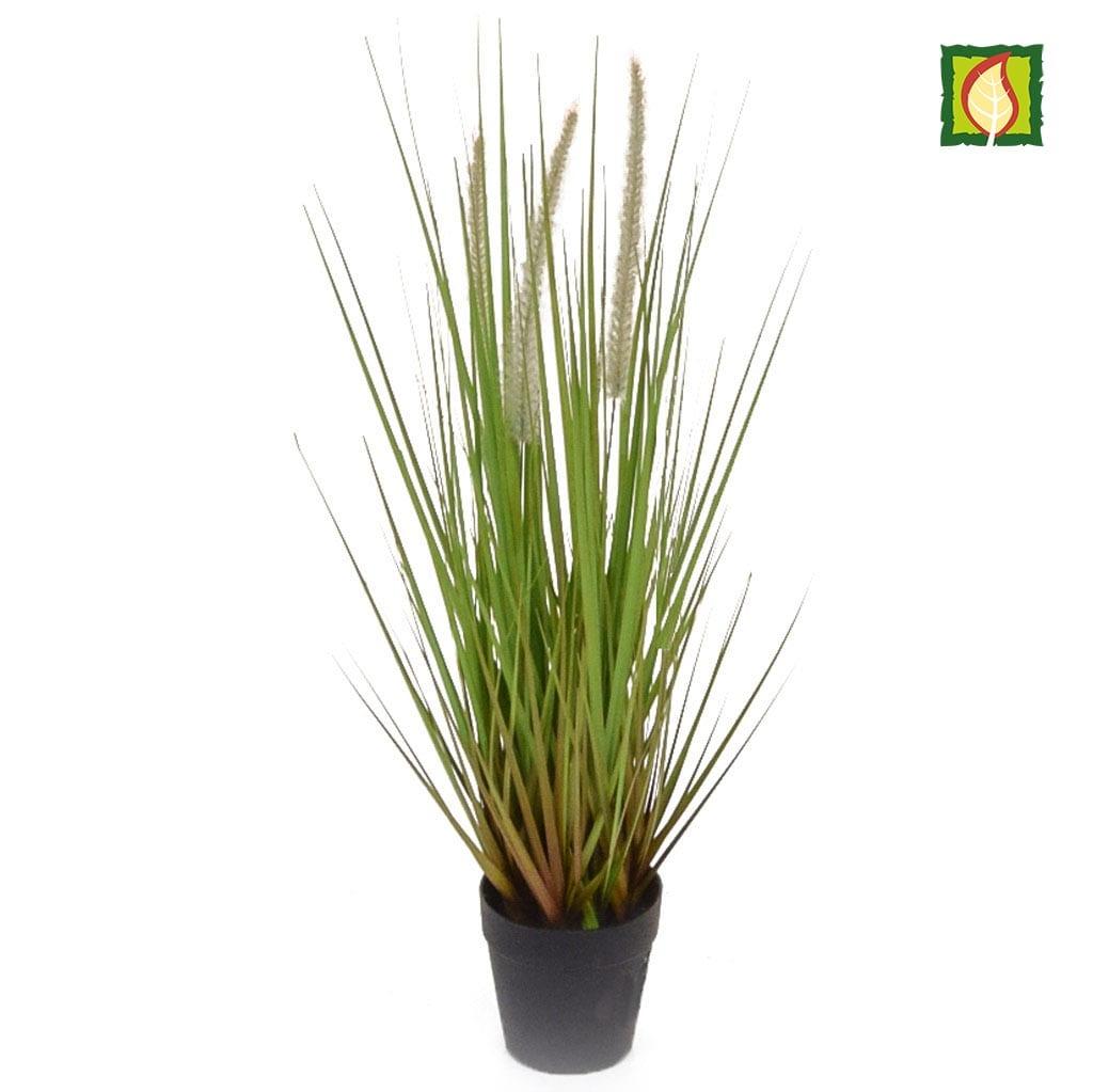 Grass Dogtail Grass A with pot 52cm FR